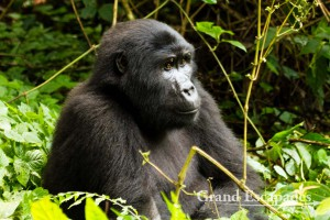 Travel Guide To Uganda